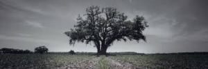 TD Tree